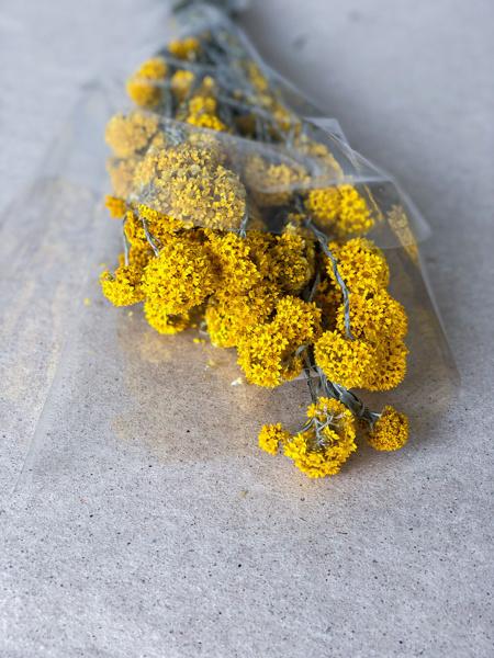 Afbeeldingen van Sanfordi geel naturel