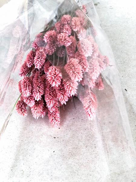 Afbeeldingen van Phalaris oud roze