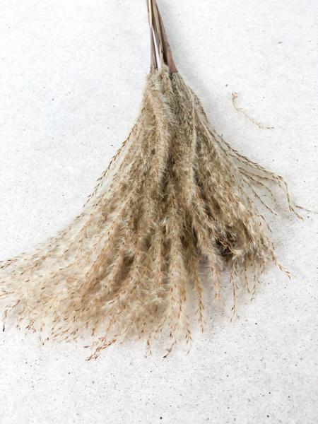 Afbeeldingen van Miscanthus naturel