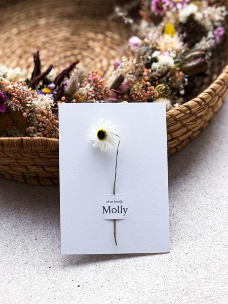 Afbeeldingen van Molly