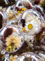 Afbeeldingen van Flowerbell