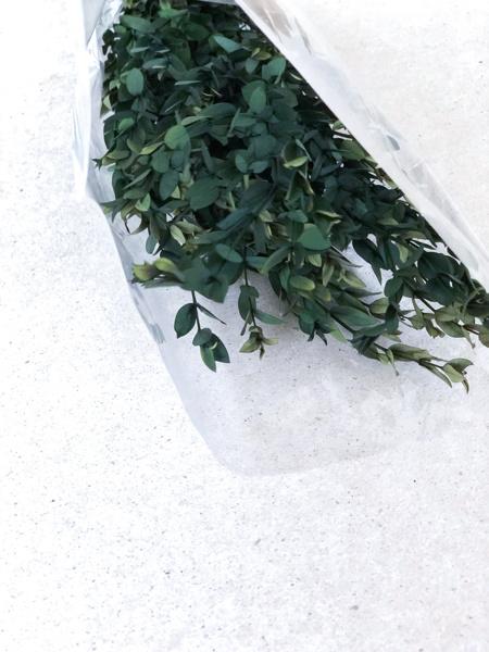 Afbeeldingen van Eucalyptus parvifolia