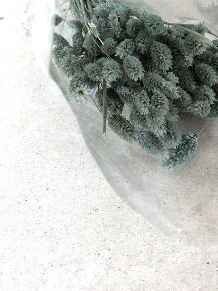 Afbeeldingen van Phalaris groenblauw