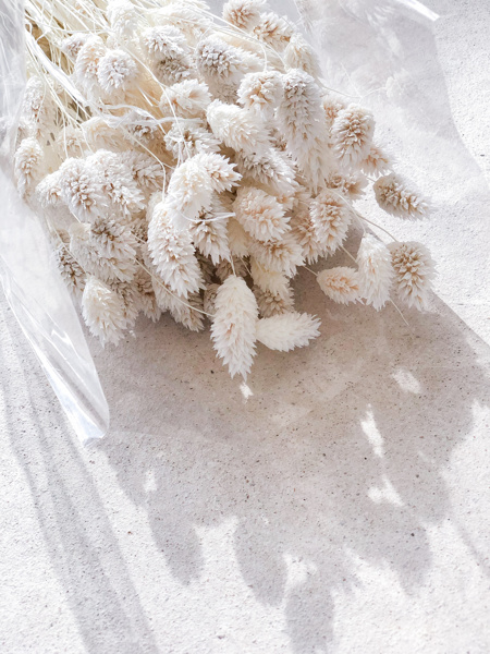 Afbeeldingen van Phalaris wit