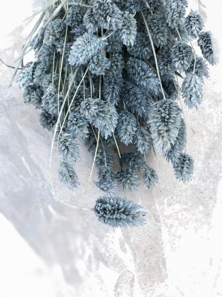 Afbeeldingen van Phalaris Grijsblauw