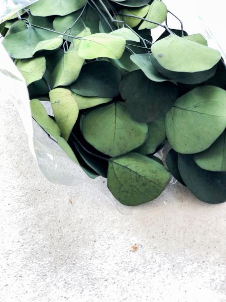 Afbeeldingen van Eucalyptus populus groen