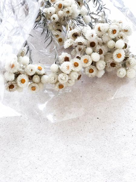 Afbeeldingen van Immortelle wit naturel