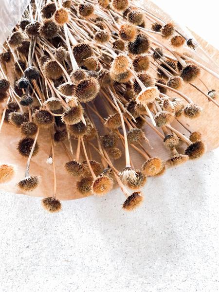Afbeeldingen van Wild daisy naturel